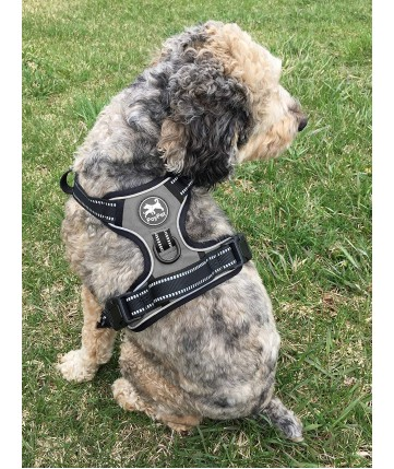 PoyPet 2018 No Pull Dog Harness - 3M Reflective - 2 Metal Front & Back Leash Hooks  - With Easy Control Handle - 3 Snap Buckles ( Grey )