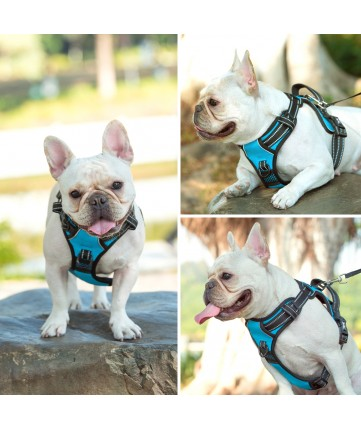 PoyPet No Pull Dog Harness Lockable- 3M Reflective - 2 Metal Front & Back Leash Hooks   ( Blue )