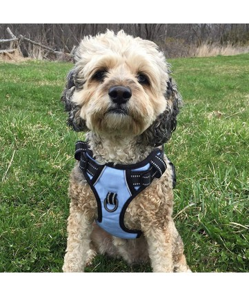 PoyPet No Pull Dog Harness - 2 Snap Buckles - 3M Reflective - 2 Metal Front & Back Leash Hooks With Easy Control Handle ( Light Blue ,Over The Head Design)